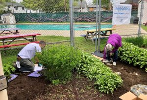 Environmental Protection Division Volunteers Weeding